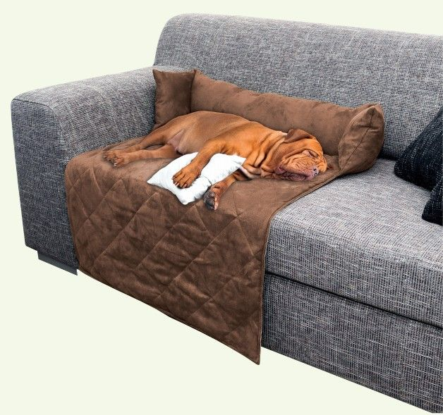 1000 ideas about large dog beds on pinterest dog beds - Como elegir sofa ...