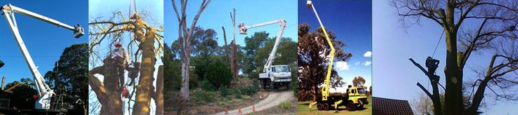 A Cut Above Tree Service is here to handle all of your tree service needs. We specialise in tree pruning and tree lopping in Perth. We can be trusted with any of your government, private or public work projects that require tree removal or stump grinding in Perth. Get in touch with us today to know more!