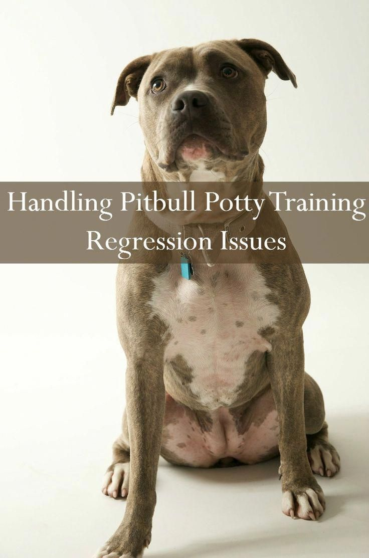 what can i feed my pitbull puppy to gain weight