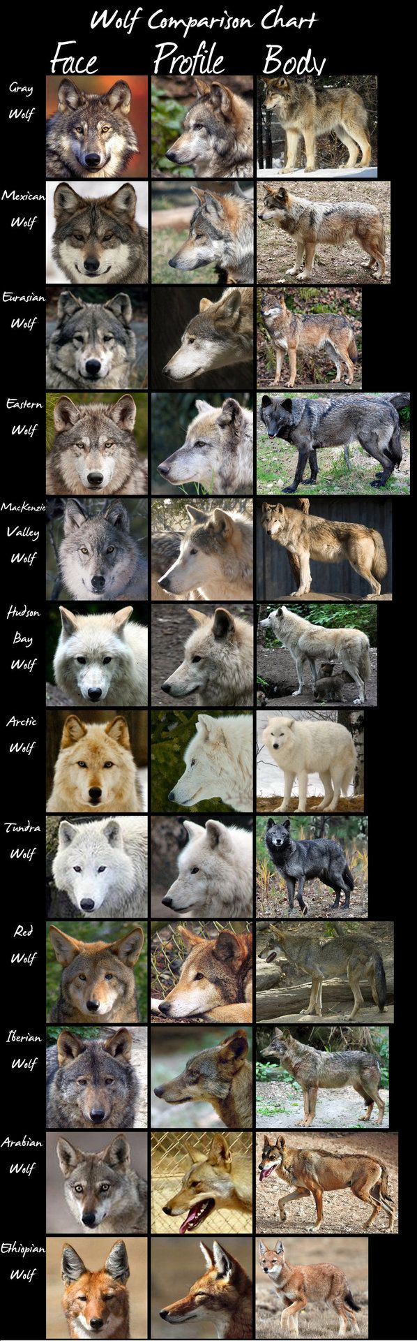 wolveswolves: Wolf Comparison Chart by HDevers A very handy chart comparing most wolf (sub)species. Click the above link for full size.