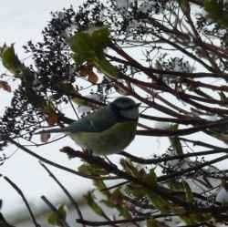 Find out how to feed birds in winter, including the best foods and methods of feeding the wild birds visiting your garden during this most difficult...
