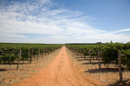 Vineyards.. Lots in Mildura, Victoria. We've picked the grapes and sampled the wines!