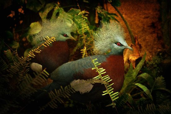 Two Victoria Crowned Pigeons in mystery forest by steppeland blank inside  Price: €1.96 - Check discounts!