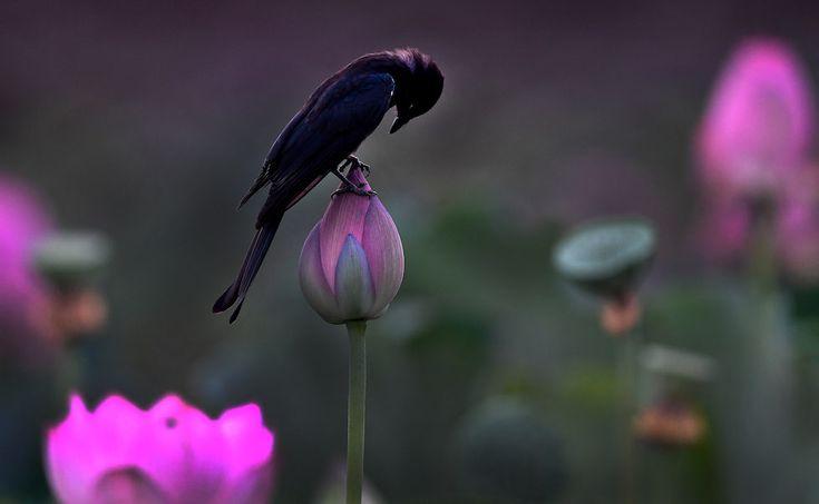 Un pájaro sobre una flor en Tangshu, en el condado de Shucheng (Cina) (© Tao Ming/Xinhua via ZUMA Wire)