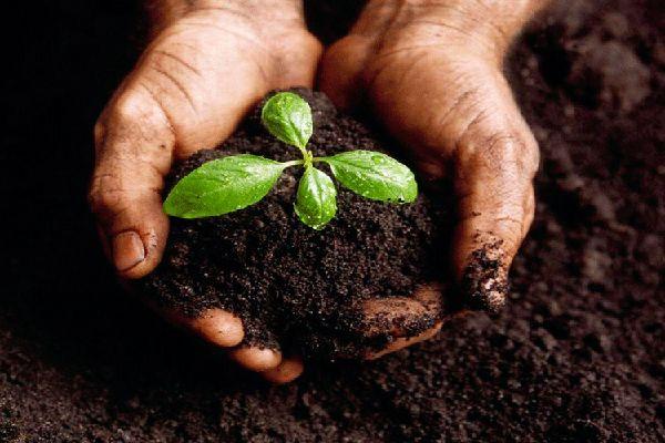 A compostagem é uma excelente opção para destinar os resíduos orgânicos da sua casa e manter as suas plantas sempre verdes. Conheça mais sobre isso!