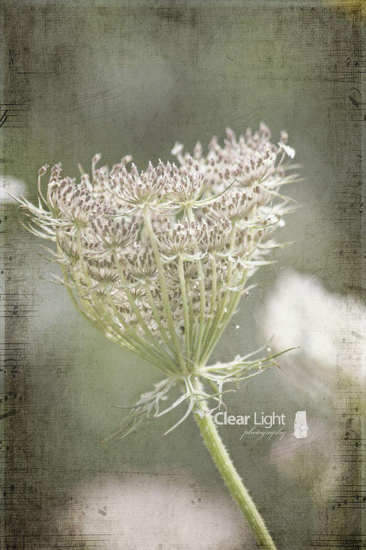 Wildflower..