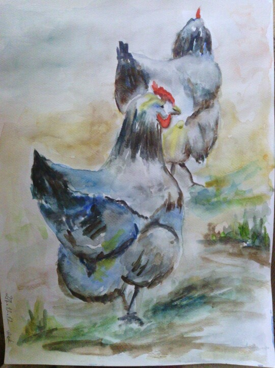 blue chickens