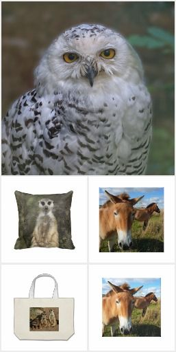 Wild Animals/bags, hats, pillows, All-Over prints
