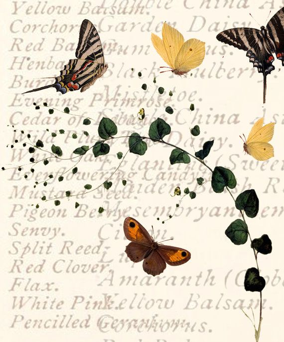 Greetings Card Hand Made botanical butterfles nature by modestly, £3.00