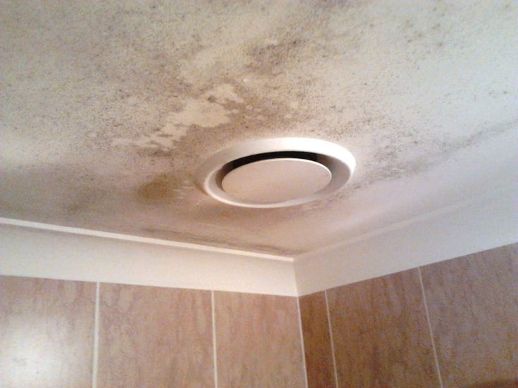 Killing Mold In Bathroom Ceiling cleaning bathroom mold on ceiling | ideas | pinterest | bathroom