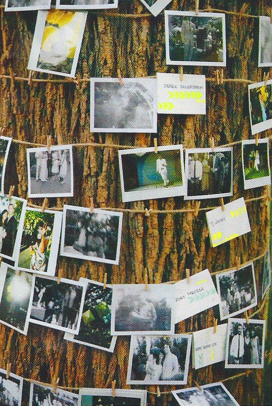 Guests take Polaroids and hang them from a tree
