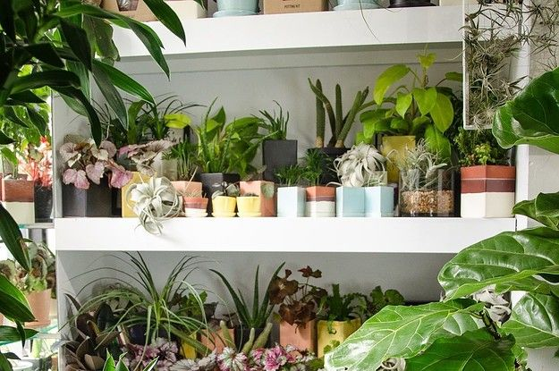 18 Of The Best Places To Buy Houseplants Online Buzzfeed Small