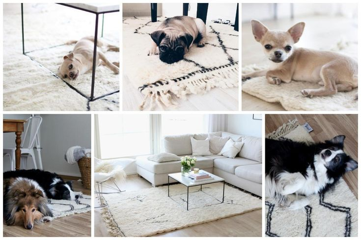 Dogs love Sukhi's beni ourain rugs!
