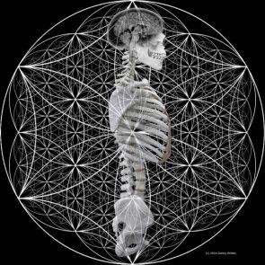 20 marzo, Percezioni anatomiche nello yoga – due realtà a confronto