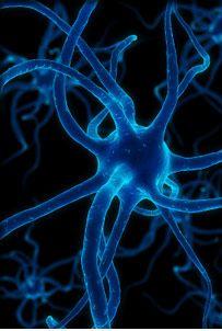 Google Image Result for http://www.rpi.edu/dept/bio/images/photo/neuron-1.jpg