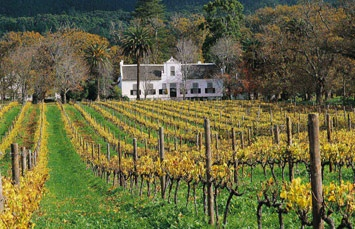 The Steenberg Luxury Hotel | Luxury Hotel Accommodation in Cape Town
