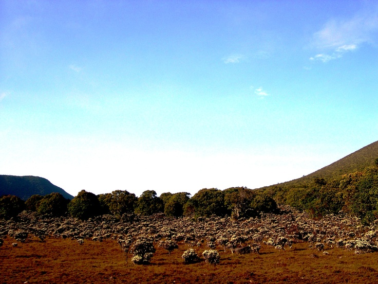 Edelweiss valley named Mandalawangi located at Mountain Gede, Gede Pangrango National Park (GPNP). Designated in 1980, GPNP is one of the first five national parks in Indonesia.