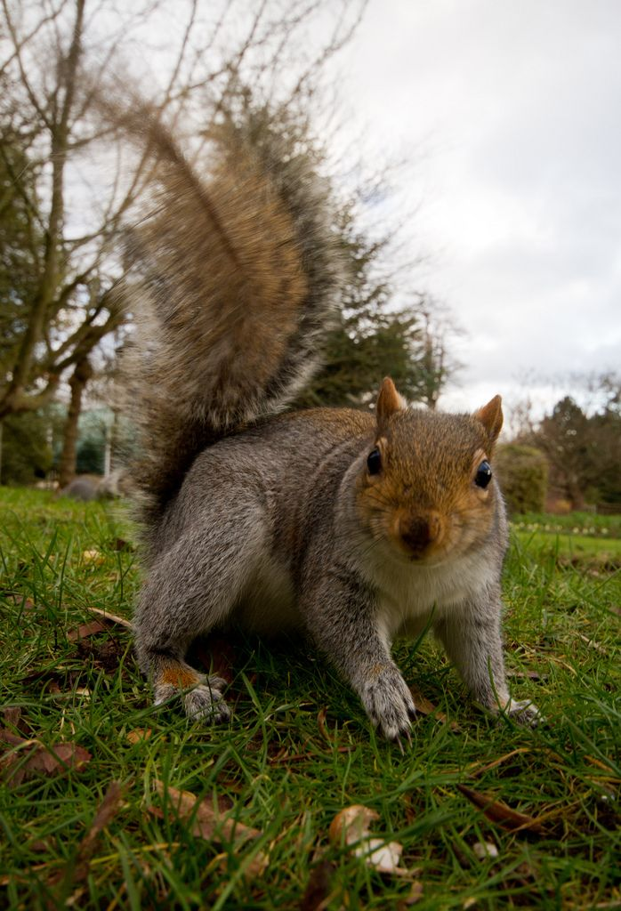 Squirrel Animals Pictures - Freaking News