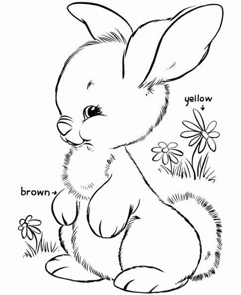 Colorear Conejo.