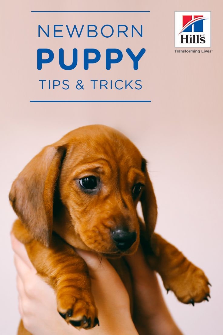 Newborn Puppy Care 5 Things You Need To Know Hill S Pet Newborn Puppies Newborn Puppy Care Puppy Care