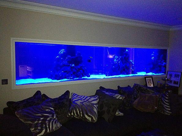 21 best aquarium group luxury home aquarium images on for Luxury fish tanks
