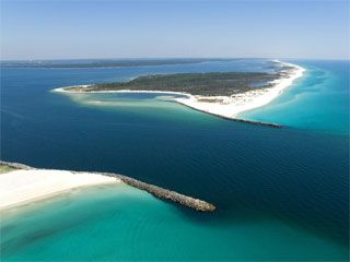 Shell Island - Florida - Hunt for shells and swim with wild dolphins!