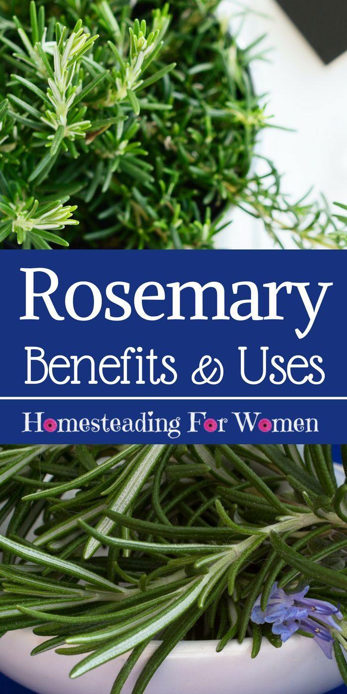 Rosemary Herb Health Benefits