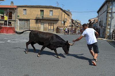 De Todo un Poco: Vacas de Vicente Dominguez - Gonzalo Egea Buñuales...