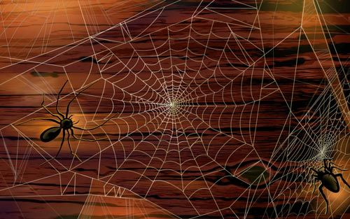 Scary-Halloween-2012-Spiders-HD-Wallpaper-2
