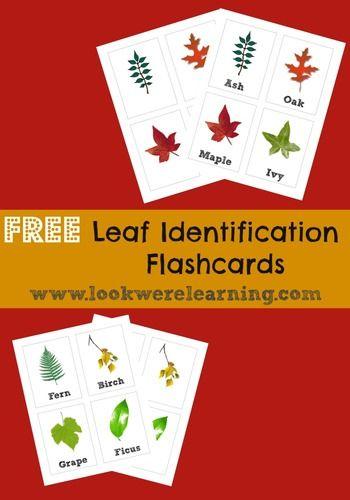 Leaf+Identification+Flashcards,+$0.00