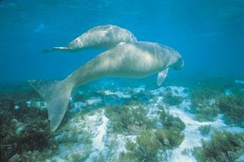 Hinchinbrook Island National Park; renowned for its dugong population.