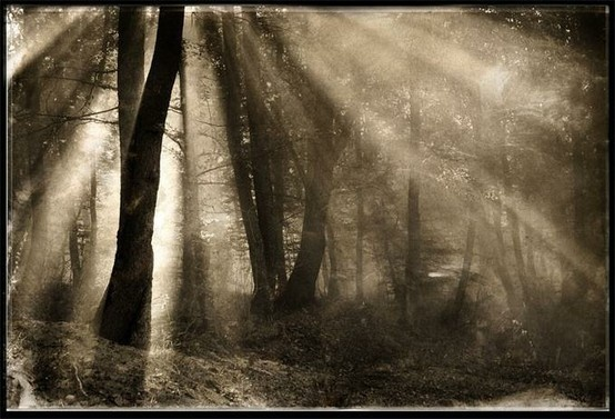 light in treesForests Forests, Picture Quotes, Magic Forests, Positive Quoteswordssay, Art, Beautiful, Divination Inspiration, Pictures Quotes, Inspiration 41
