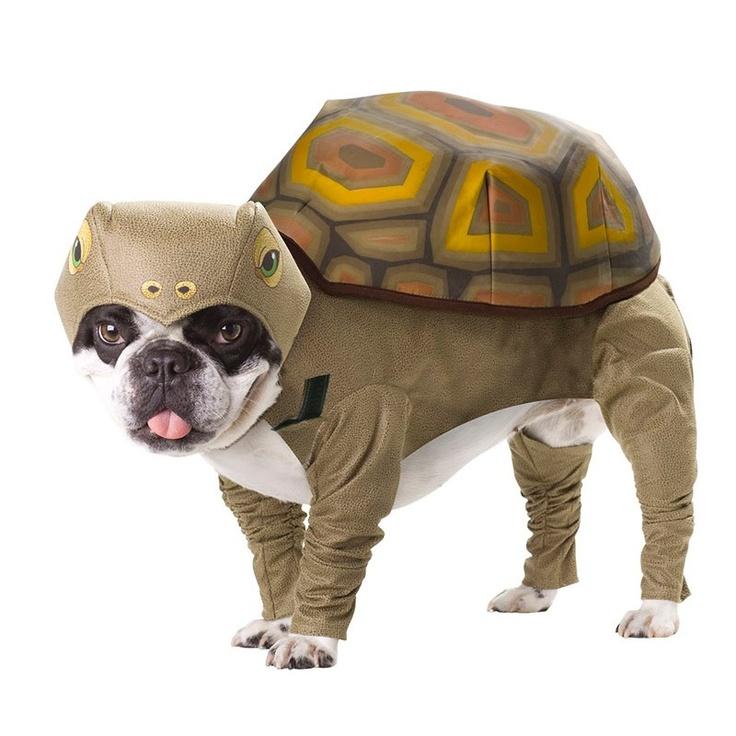 Disfraz De Tortuga Para Perro Varios Tamaños