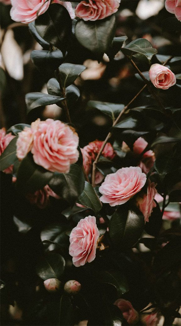 Jazz Up Your Iphone With These Stunning Pictures When You Pick Up Your Iphone The First Thing That Y Flower Phone Wallpaper Flower Aesthetic Aesthetic Roses