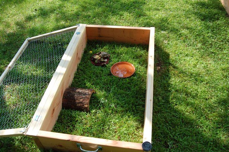 tortoise box | Outside enclosures - Tortoise Forum - Tortoise Husbandry Community
