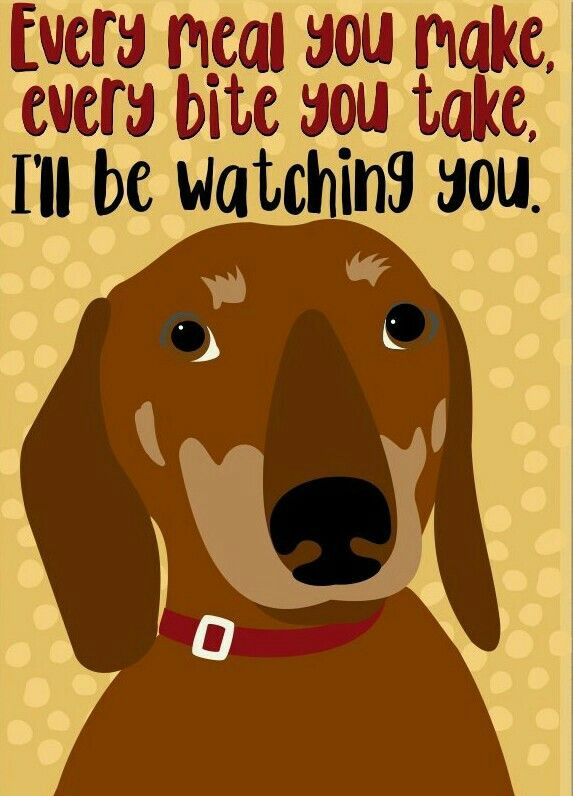 Dachshund Dog Jokes Weiner Dog Safe Dog Toys