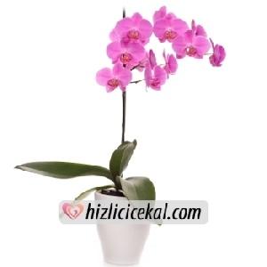 Tekli Pembe Orkide Çiçeği  Hızlı Çiçek Al ile sevdiklerinize aynı gün teslimat seçeneği ile seramik içinde tek dallı saksıda köklü orkide çiçeği sipariş edin.  84,00 tl + kdv  http://www.hizlicicekal.com/cicekler/cicekciler/cicek/114/tekli-pembe-orkide-cicegi/