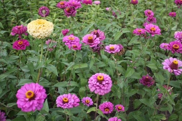 Сбор и хранение семян - Садоводка