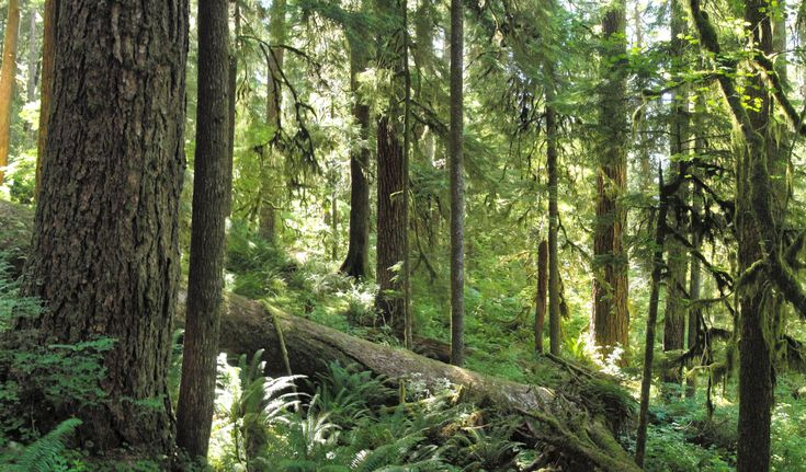 north american forest - Google Search
