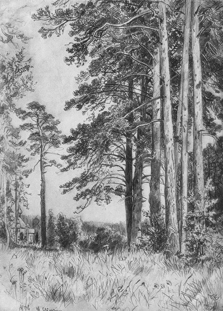 Backwoods - Ivan Shishkin (Russian: Ива́н  Ши́шкин (1832–1898)) was a Russian landscape painter.
