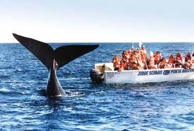 Whale watching at Puerto Madryn,activities to do in Patagonia, Argentina