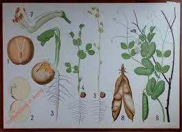 botanische platen