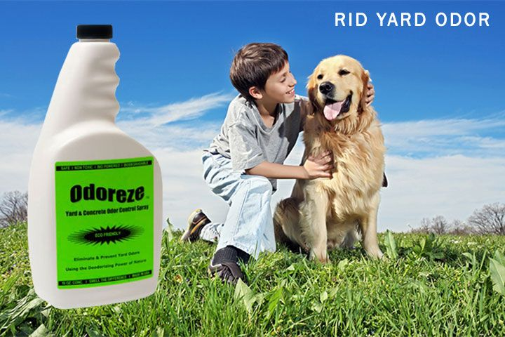 Yard Dog Pee Smell Eliminate Naturally