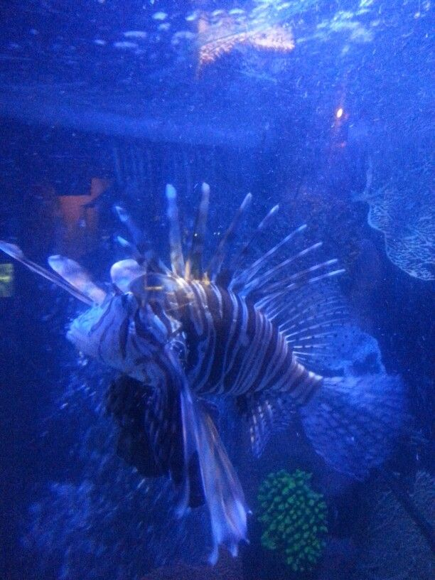 such a interesting fish. forgotten the type of fish but it has so much going on. really beautiful .