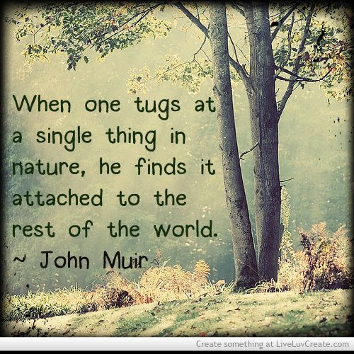 Images Of Nature With Quotes For Facebook: 412 Best Nature Quotes Images On Pinterest