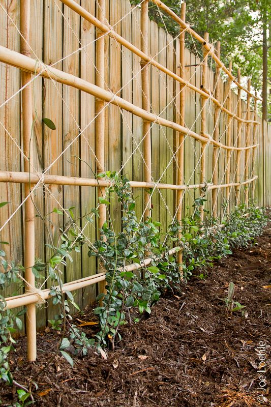 Trellis Ideas For Vines Part - 23: Lashed Trellis/ Great To Do To Start Your Vines Growing And I Just Bought A  Jasmine Vine For My Back Yard To Smell While Swimming Or Just Layin In The  Sun!