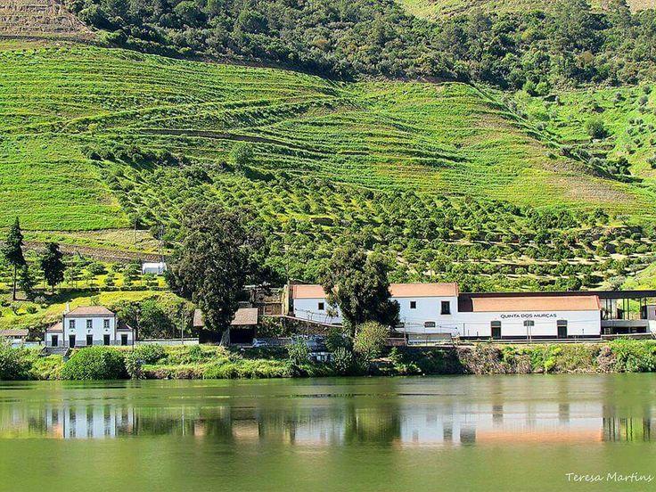 Douro - Qta das Murças,  Régua