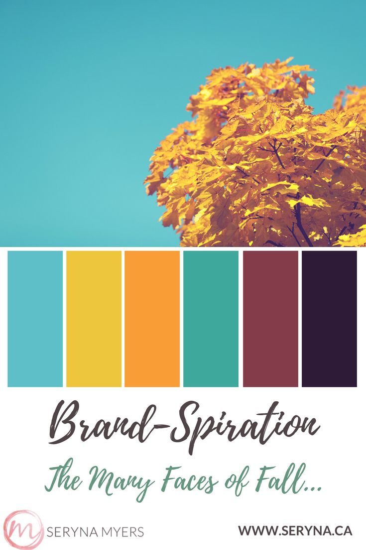 A beautiful autumn sunny day to fall in love with, and the brand palette it inspired.