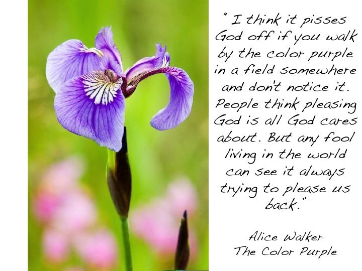 the 25 best the color purple quotes ideas on pinterest purple love the color purple and purple stuff - The Color Purple Book Pdf