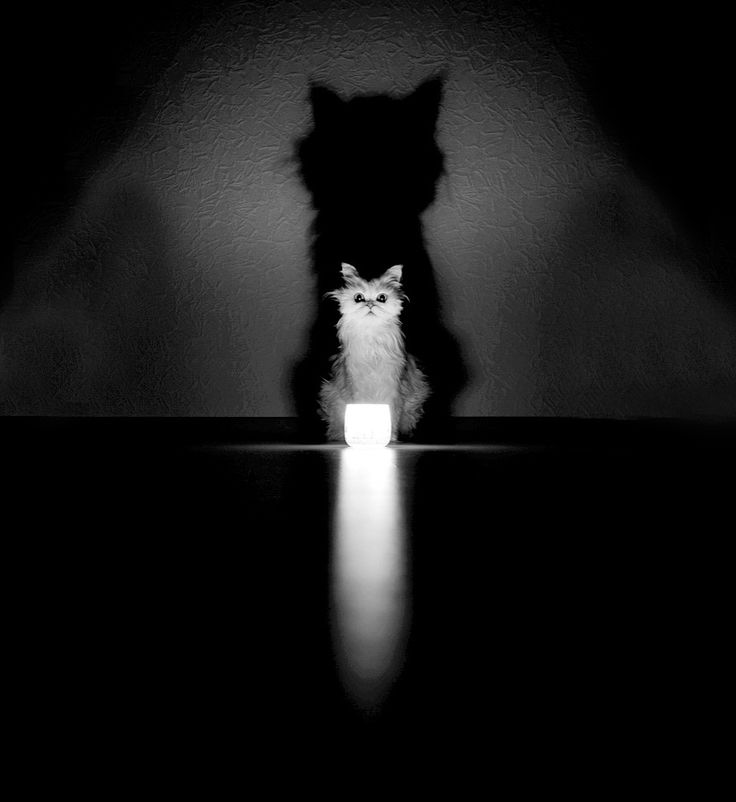 The Mysterious Lives Of Cats Captured In Black & White #photography #photo http://www.boredpanda.com/mysterious-cat/